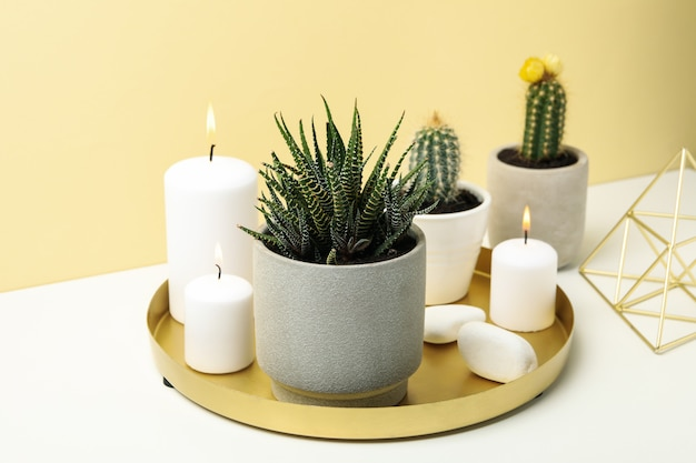 Succulenten en kaarsen op witte tafel. kamerplanten