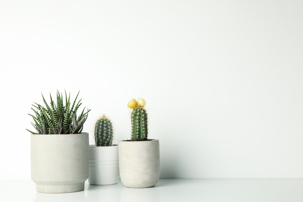 Succulenten in potten op wit oppervlak