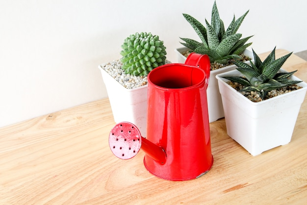 Succulents of cactus in concrete potten over witte achtergrond op de plank en spot op kaderfoto