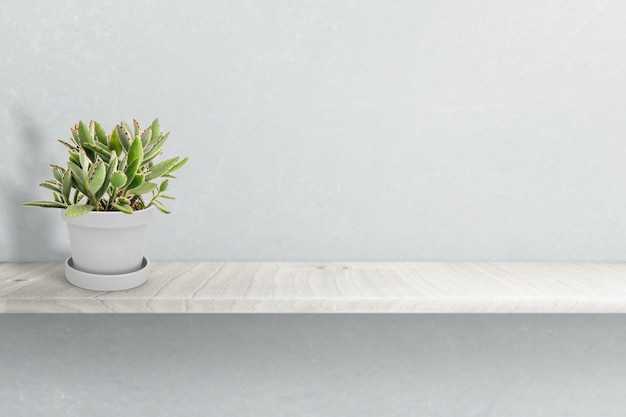 Suculent plant op vaas geïsoleerd op witte vaas ornament
