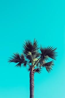 Suikerpalm op blauwe hemelachtergrond