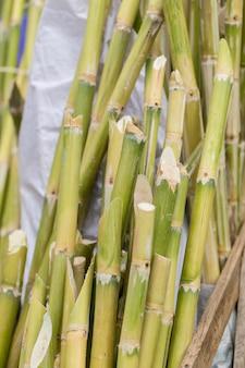 Suikerriet bagasse, bron van zoete suiker voor voedsel en natuurvezel recyclage voor biobrandstofpulp en bouwmaterialen.