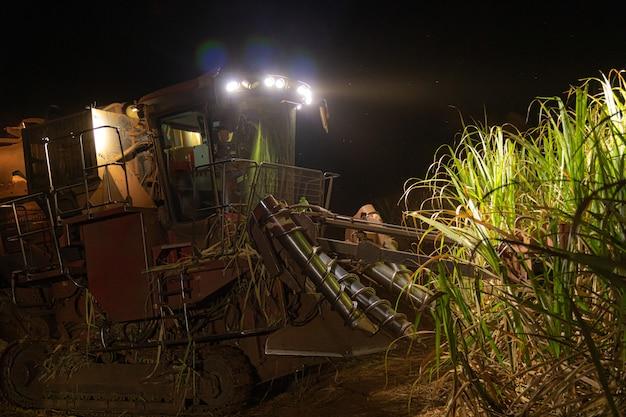 Suikerriet hasvest plantage nacht