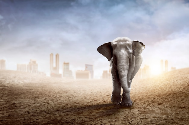 Sumatraanse olifantenwandeling over de woestijn