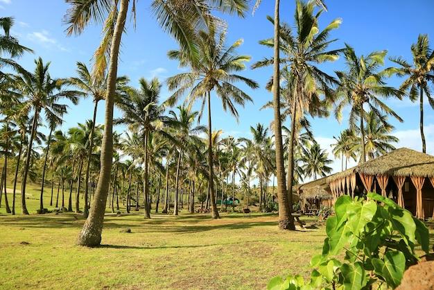 Sunshine beach met palmbomen