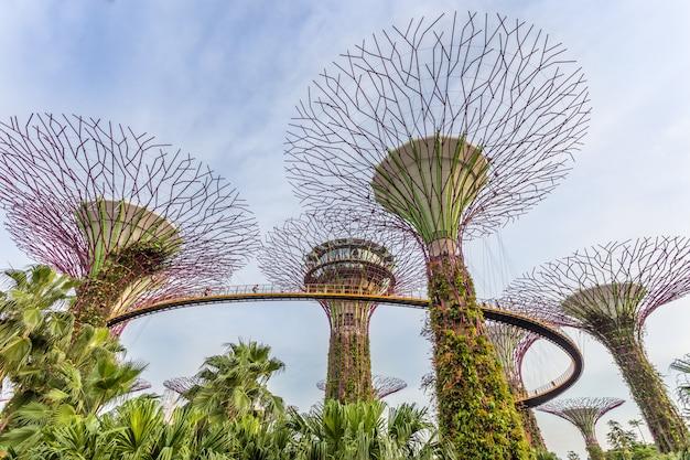 Supertrees bij gardens by the bay. sluit omhoog luchtmening van de botanische tuin