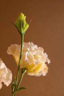 Surrealistisch donker chroom oranje en witte bloem eustoma macro geïsoleerd op bruin stilleven esthetische co...