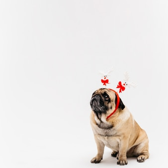 Sweet pug in xmas deer kostuum oren