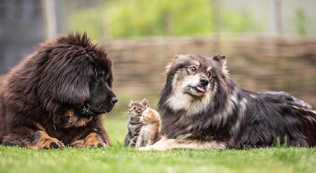 Symbiose van honden en kittens in de tuin. gesocialiseerde dieren katten en honden.