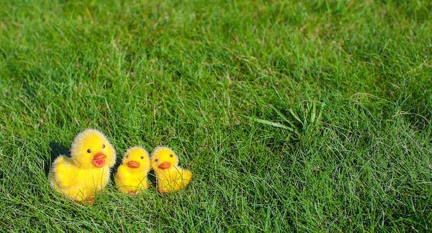 Symbool van de paasvakantie - kleine gele kippen op groen gras