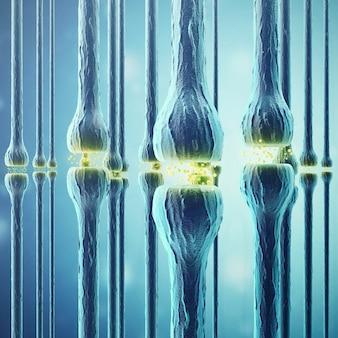 Synaptische transmissie, menselijk zenuwstelsel.