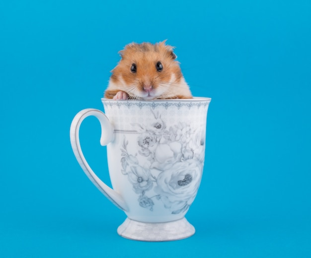 Syrische hamster die uit een theekop piept