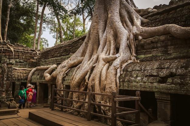 Ta prohm-tempel - een symbiose van wortels en stenen.