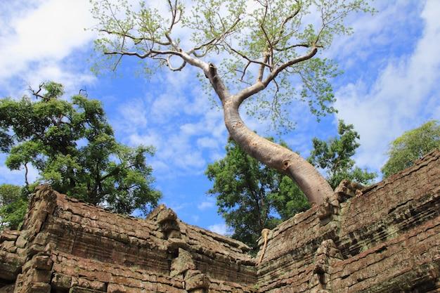 Ta prohm-tempel, siem reap, kambodja.
