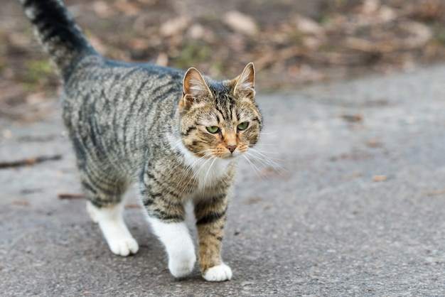 Tabby cat terug. kitty loopt op de oude weg.