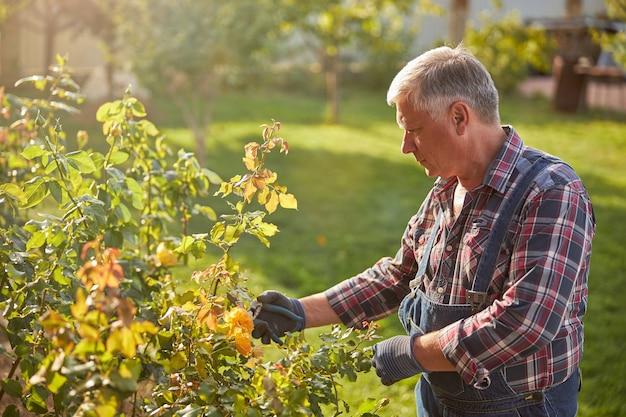 Taillefoto van een bejaarde man die een tang vasthoudt en voor rozenstruiken in zijn tuin zorgt