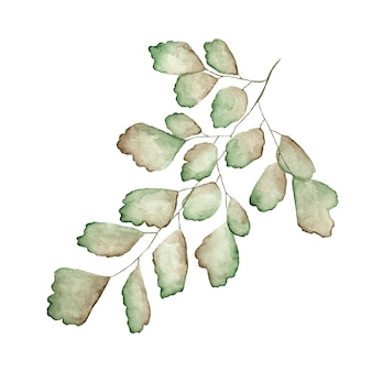 Tak met bladeren aquarel geschilderd op wit
