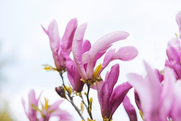 Tak met bloesem bloemen