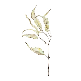 Tak met groene bladeren aquarel geschilderd op wit