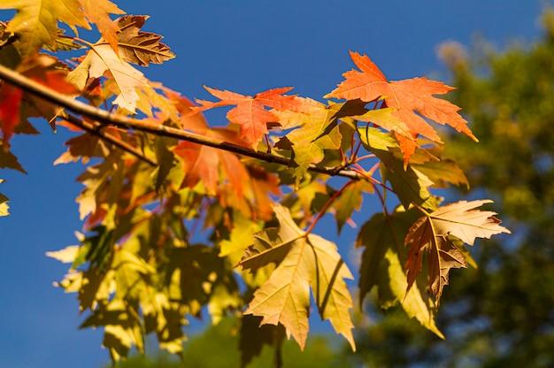 Tak met herfstbladeren