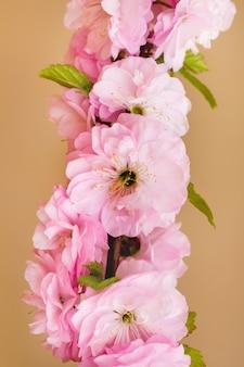 Tak met roze bloemen van japanse kers op oranje achtergrond