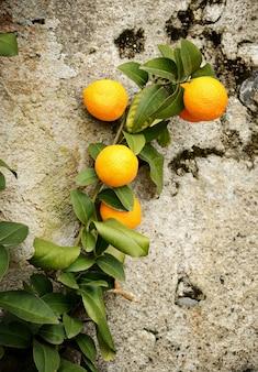 Tak met sinaasappels tegen een betonnen muur