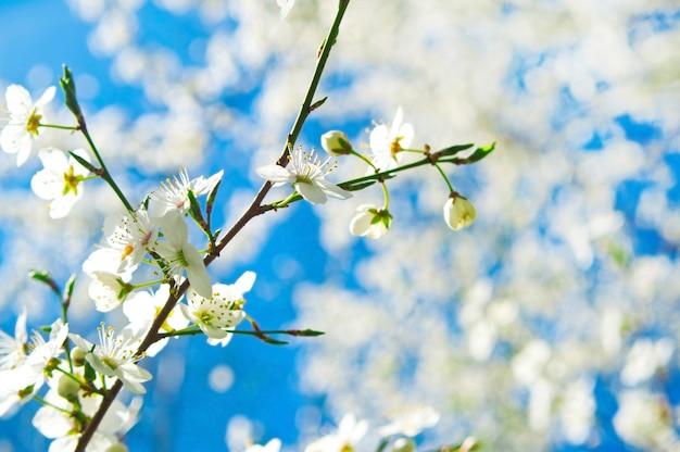 Tak met witte bloemen
