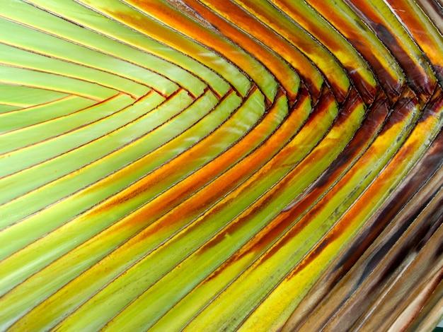 Tak palm verlaat patroon achtergrond