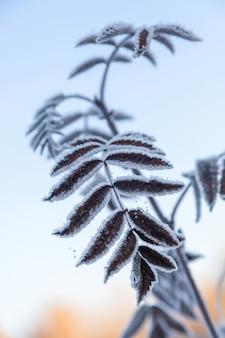 Tak van een boom bedekt met rijp met blauwe lucht in de vroege ochtend