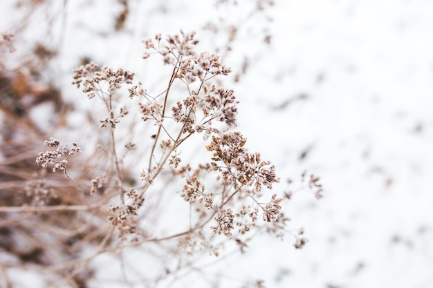 Tak van een boom met sneeuw achtergrond