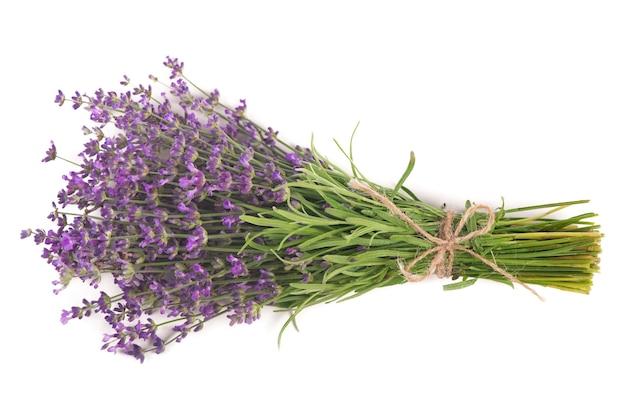 Tak van een lavendel geïsoleerd op een witte ondergrond