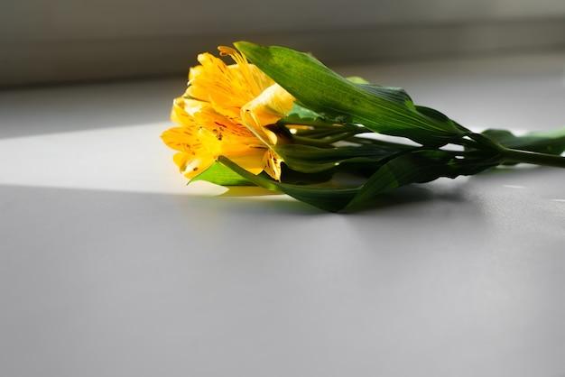 Tak van gele lelies die op vensterbank in een zonnestraal liggen