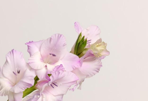 Tak van gladiolenbloemen