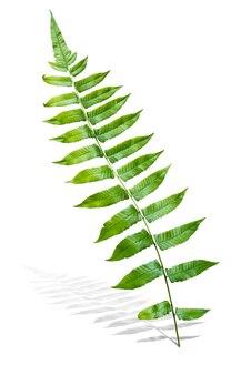 Tak van groen varenblad