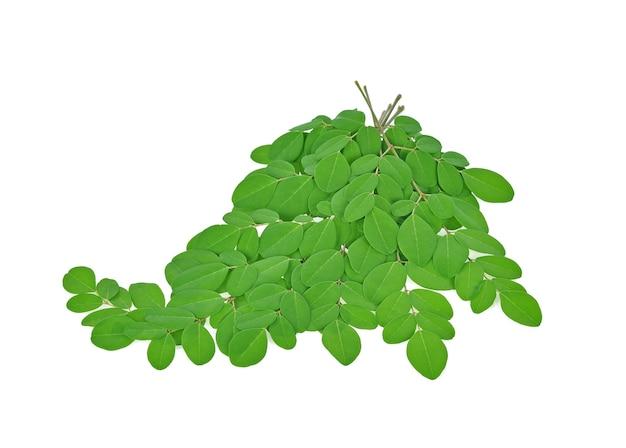 Tak van groene moringabladeren, tropische die kruiden op witte achtergrond worden geïsoleerd