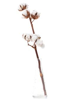 Tak van katoen close-up op witte achtergrond bloemen concept
