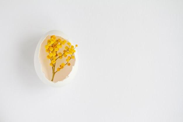 Tak van mimosa in een witte schaal van een kippenei op wit oppervlak