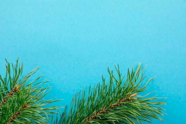 Tak van spar op een blauwe close-up als achtergrond