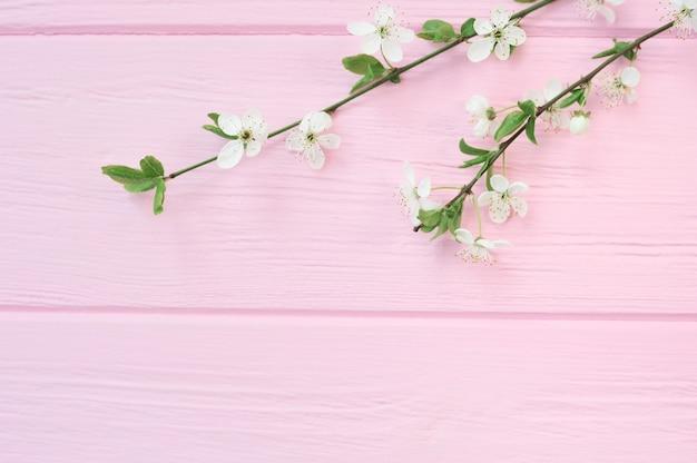 Tak van witte kersen bloemen op roze houten achtergrond met plaats voor uw tekst.