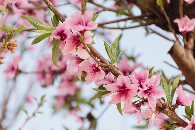 Takje met mooie bloemen op boom