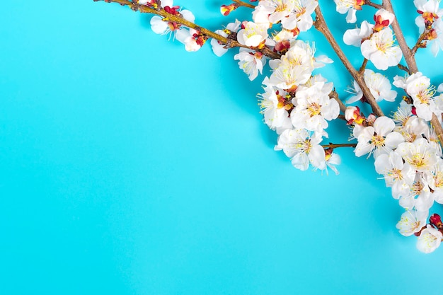 Takjes van de abrikozenboom met bloemen op blauwe achtergrond.