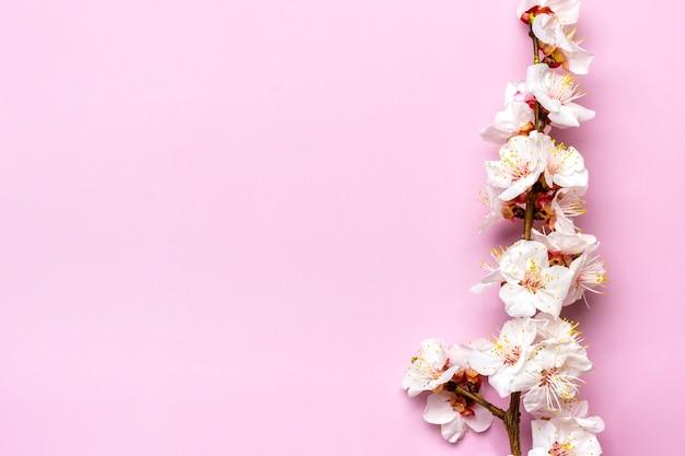 Takjes van de abrikozenboom met bloemen