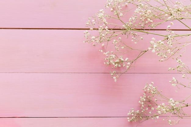 Takjes van plant met bloemen