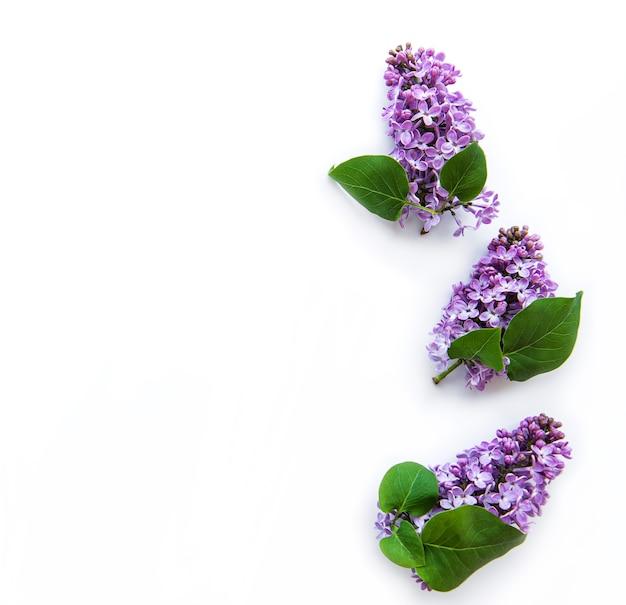 Takken en bloemen van lila op een wit