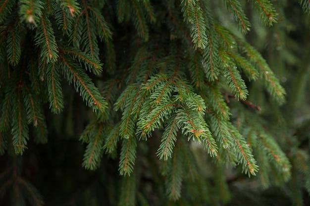 Takken harige boom aard achtergrond voor een kerstkaart.