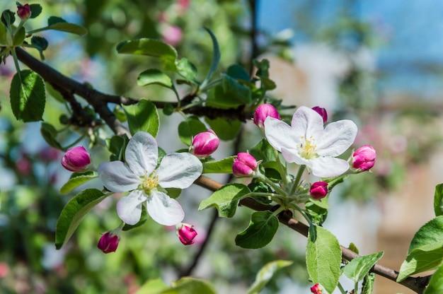 Takken met witte bloemen op een achtergrond van groene tuin