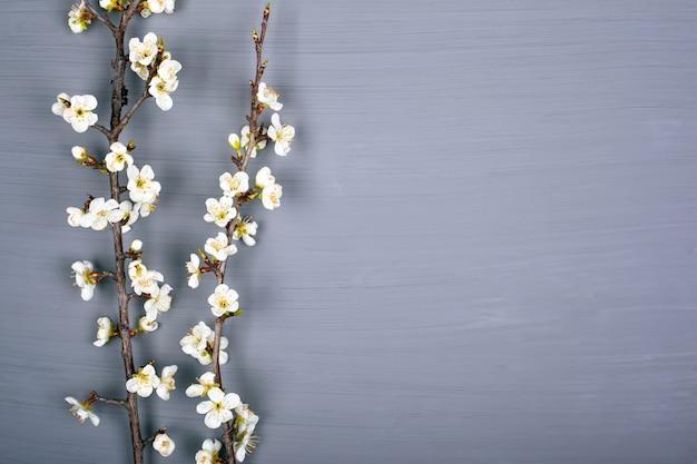 Takken met witte bloemen van kers op een grijze achtergrond, kopie ruimte, bovenaanzicht.