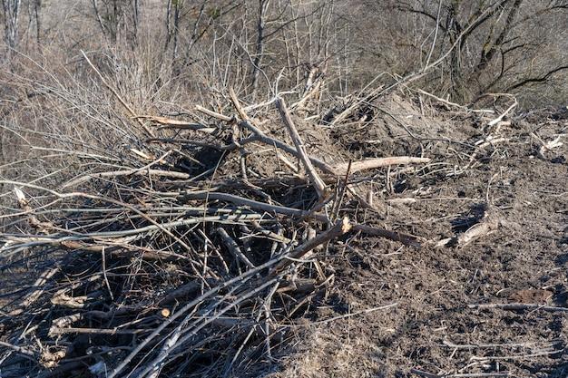 Takken op aarde van gezaagde bomen