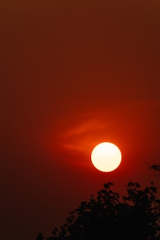 Takken silhouet bij zonsondergang