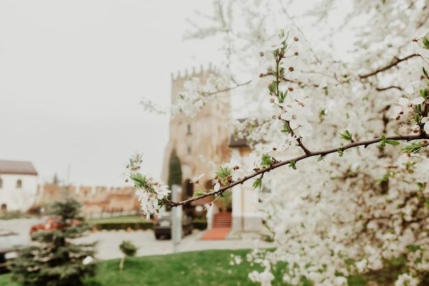 Takken van bloeiende boom. oude castler achtergrond